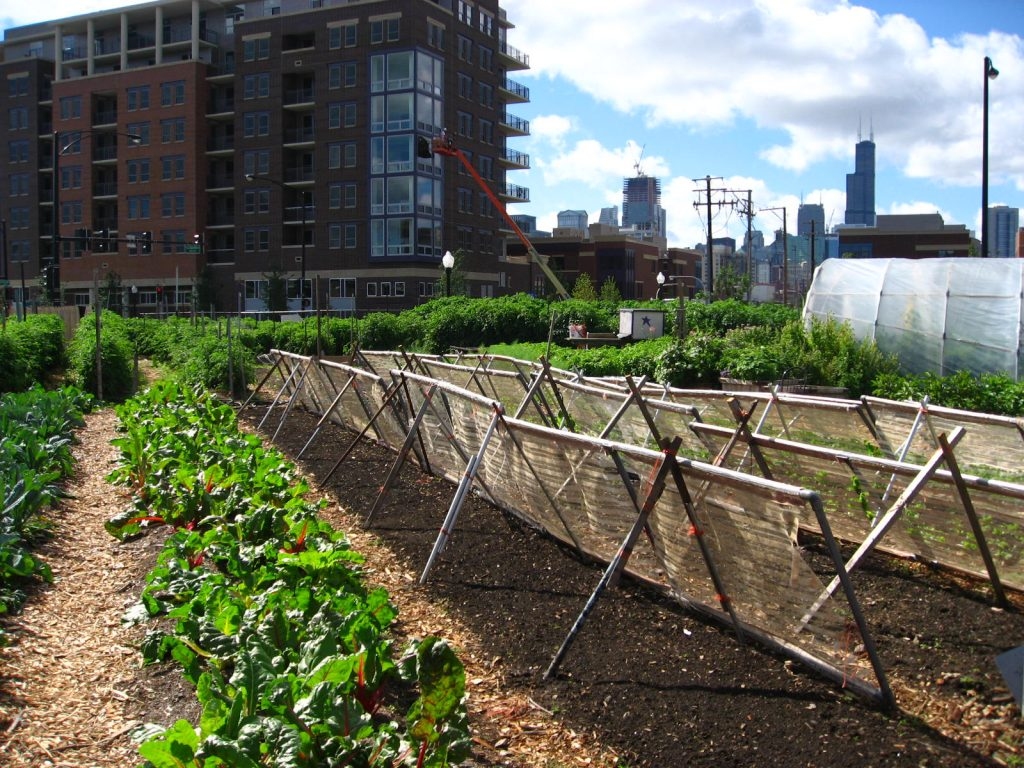 An urban farm in Chicago that replaced public housing